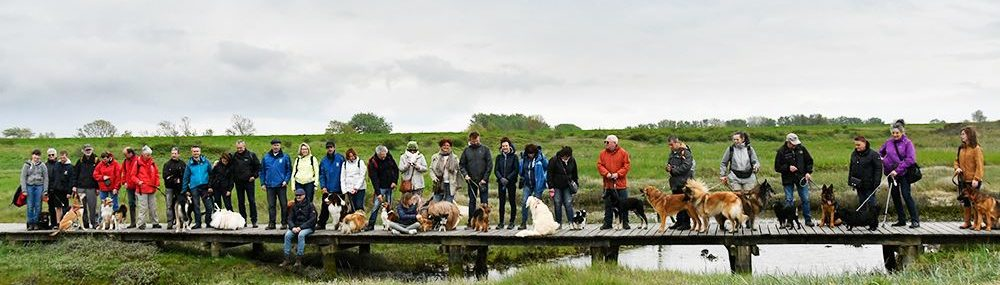 Bonheidense Hondenvrienden vzw